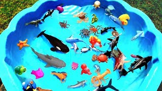 Learn Colors For Kids With Wild Zoo Animals and Sea Creatures | Learn Animal Names