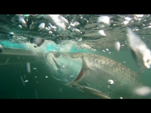 RTFS - Stuart Tarpon and Snook Full Episode - Season 1 Ep. 12