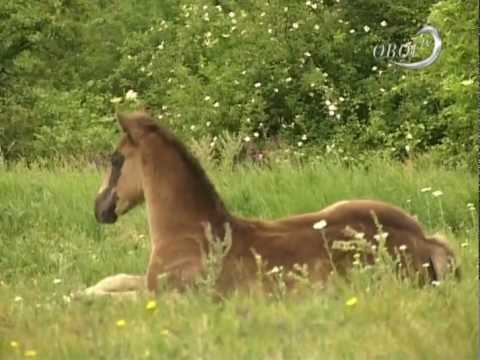 Csontó Zoltán a lovakról - Öböl TV