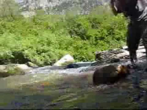 Trout fishing small creek cutthroat trout in wyoming and for Small creek fishing