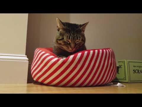 Feline Observational  - Tacy Cat Kneading