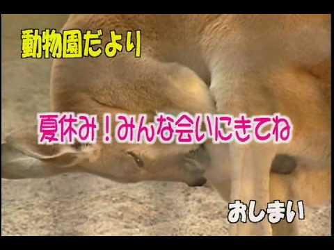 【動物園だより】「おすすめ!夏の動物園」