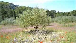 Watch James Blue Pastures video