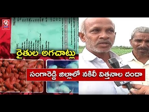 Sangareddy District Farmers Lose Crop Due To Fake Cotton Seeds | V6 News
