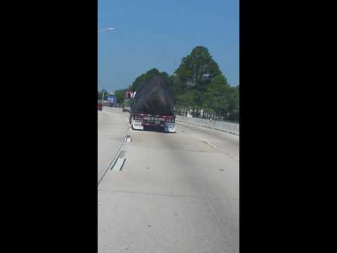 U.S Government Transporting Alien Dog in Florida!! TOP SECRET