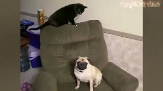 FUNNY ANIMALS : CATS AND DOGS fight | TRY NOT TO LAUGH | 1% chance these will not make you laugh |