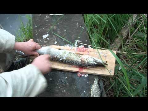 рыбалка по лепельской области