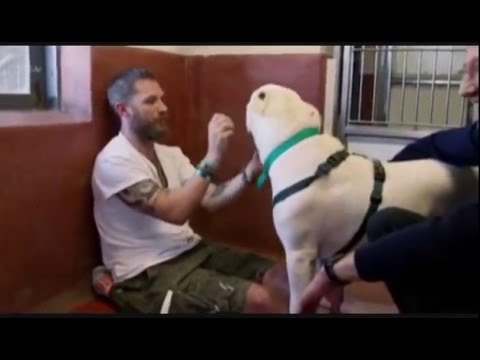 Tom Hardy Playing with Dogs at a Dog Rescue