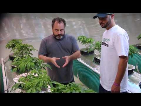 DIY Aeroponic System with Danny Danko