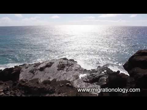 Oahu Island, Hawaii (HD Video)