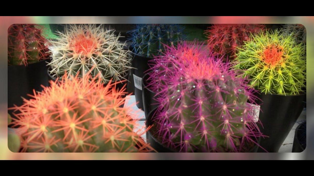 Как сделать цветные кактусы 393