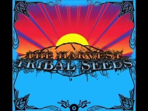 Tribal Seeds - All I Know