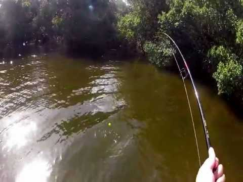 Tampa Bay Flats Fishing