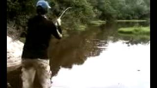 Casting giant snakehead with tonny halim 2