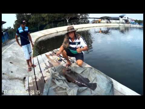 Malaysia Johor pond fishing
