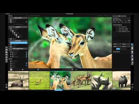 All-in-One RAW Processor and Photo Editor