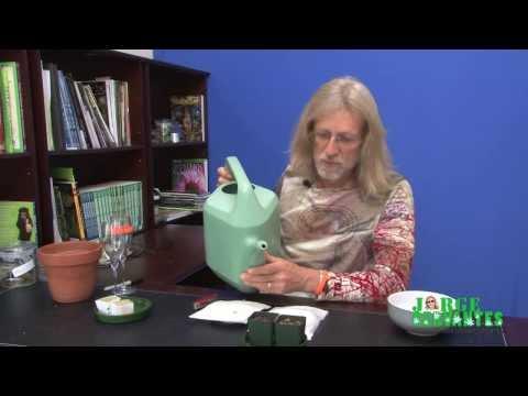 Jorge Cervantes: Planting Seeds