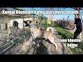 Kangal Köpekleri Kafesi Parçalıyacaklardı !! EFSANE KÖPEKLER 4. BÖLÜM ( KANGAL #1 ) Biggest dogs