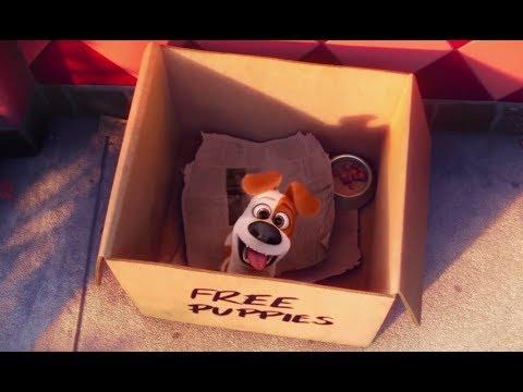 «Тайная жизнь домашних животных» - Лучшие моменты