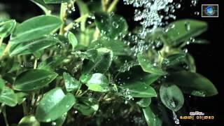 Emmanuel - New Malayalam Christian Song ~ Ariyathe Ariyathe / Jetson Sunny / Ishaan dev / Reji Emmanuel