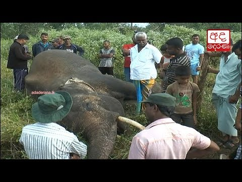 another tusker kille|eng