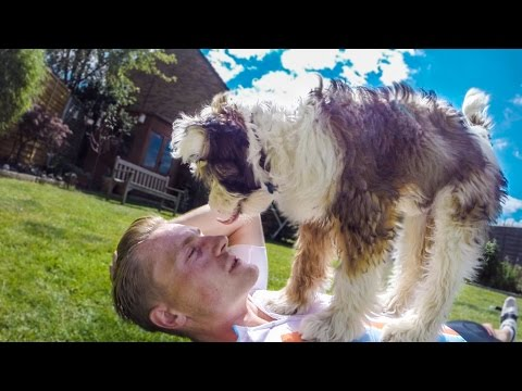 CUTE PUPPY ATTACK!
