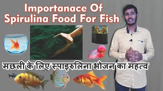 Benefits of Spirulina Food to fish - Best food for your fish