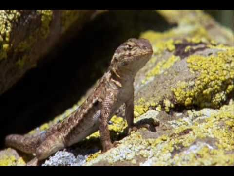 Reptiles & Amphibians A Documentary Episode 1 Part 1