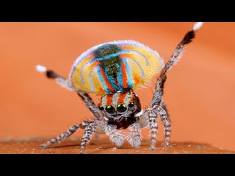 Top 10 Newly Discovered Species of Wildlife