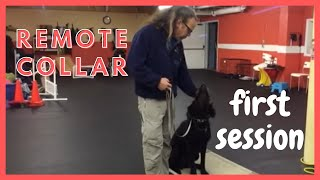 Remote Collar first session, Periscope How To