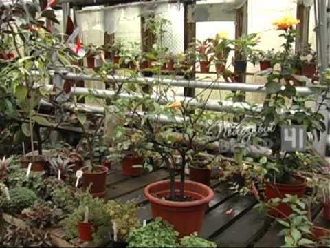 Выращиваем личи из косточки в домашних условиях