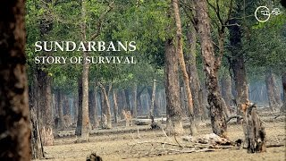 Sundarbans - Story of Survival by Green Explore Society HD (720p)
