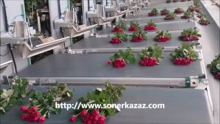 CUT ROSE GRADING AND BUNCHING MACHINE (ROSEMATIC)