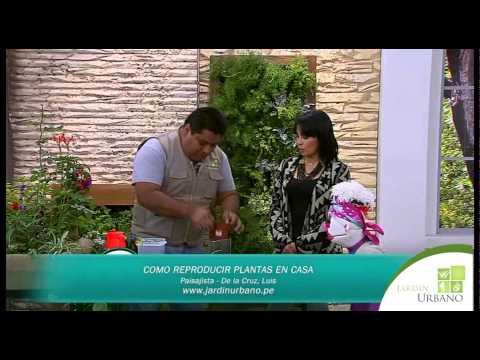 como reproducir plantas
