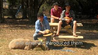 The Feral Pig and the Cane Toad (The Holly and the Ivy) - Australian Christmas Carol
