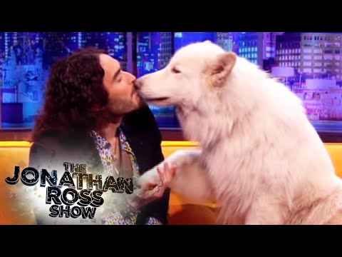 Russell Brand and Brian The Dog - The Jonathan Ross Show