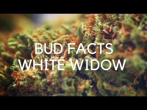 Bud Facts: White Widow