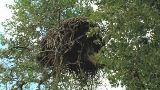 Eagle Nest Reborn