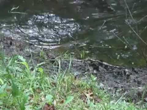 alabama frog fishing.MOV