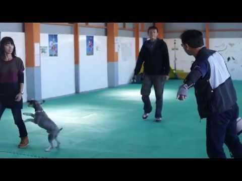 11月3日【飛行犬撮影会】ワイズドギー射水店で開催!