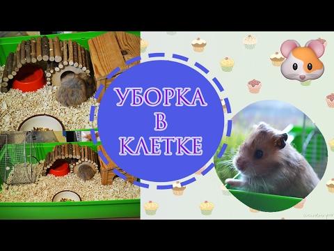 КЛЕТКА МОЕГО ХОМЯКА | My Hamster