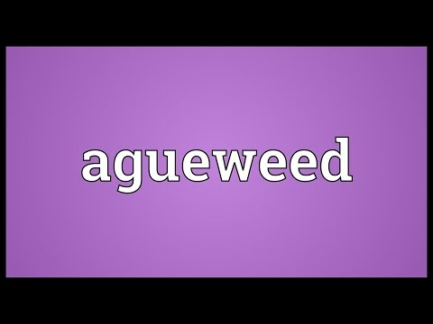 Header of agueweed