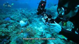 (Short version)Educational video Basic underwater strobe photography with the YS-01/YS-02