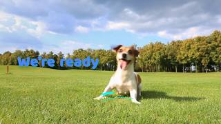 Funny Dog Marketing Ad