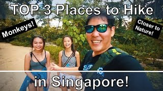 TOP 3 Places to Hike in Singapore - A Different Side of Singapore