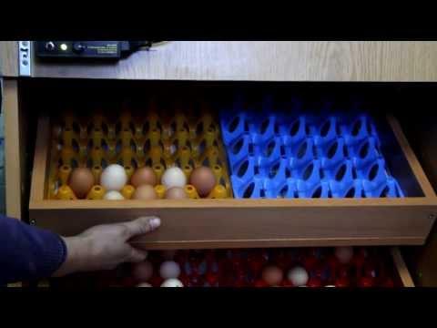 inkubator półautomatyczny z klujnikiem od 80 jaj gesich do 120 jaj kurzych lub bażanta