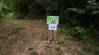 石垣島の屋外で「島のいきもの写真展」
