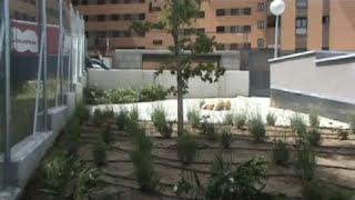 Proyecto, diseño y construcción de jardín comunitario Madrid