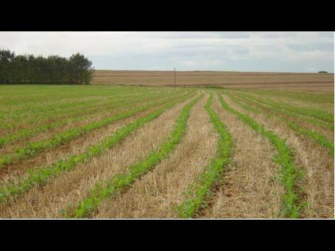 Clique e veja o vídeo Curso Formação de Pastagens com Plantio Direto