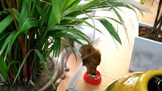 Me feeding my Soi Dog Friends outside my Apartment in Saimai Bangkok, Thailand